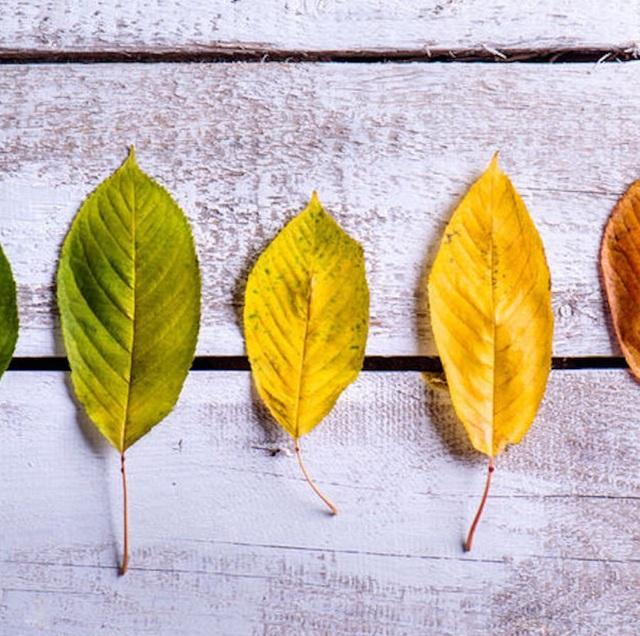 Come-vivere-in-salute-nei-cambi-stagione---La-tarda-estate